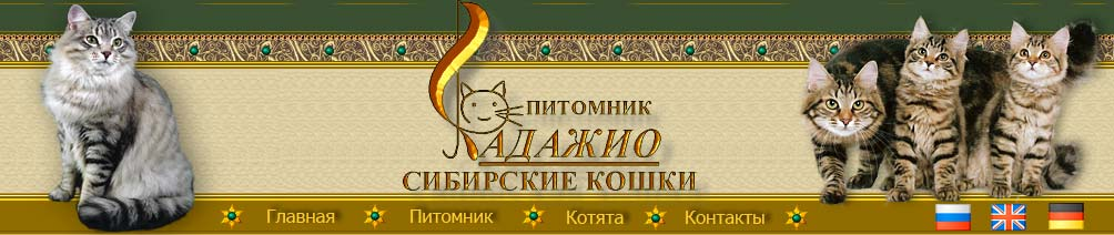 "The cattery of Siberian cats ""Adagio"""
